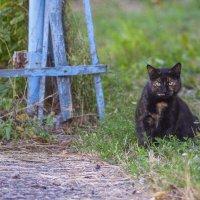 бездомные коты :: Александр Леонов