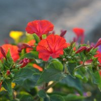 Яркие краски лета :: Любовь Р