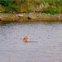 Температура воды в канале 16°C :: Кай-8 (Ярослав) Забелин