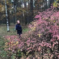 В осеннем лесу :: Yulia Raspopova