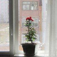 Окна №1 :: Роман Трофимов
