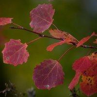 Осень.... :: Андрей + Ирина Степановы