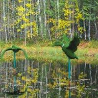Осень в парке :: Оксана Галлямова