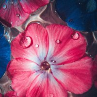 Цветок :: Виктория Писаренко