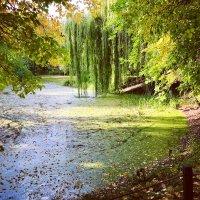 Старинный пруд ... :: Лариса Корж