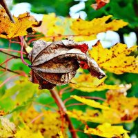 Осенний лист. :: Михаил Столяров