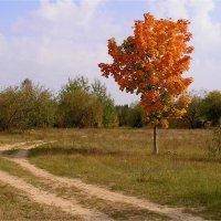 Осень у дороги :: Геннадий Худолеев