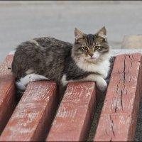 Грустный кот :: Александр Тарноградский