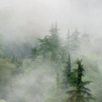 Убегающие в облака. :: игорь кио