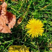 перепутал осень с весной... :: жанна janna