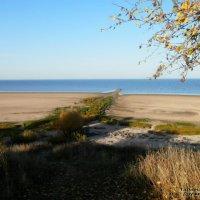 На берегу озера Ильмень :: Татьяна Дружинина