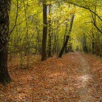 В октябрьском лесу... :: Владимир Жданов