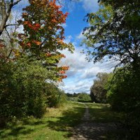 Тихие дни октября...... :: Galina Dzubina