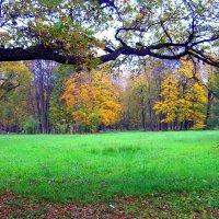 В старом парке осенью  - 5 :: Сергей