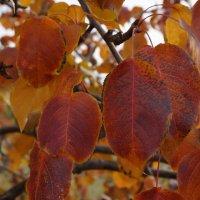 Осенние листья :: Екатерина Торганская