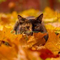 Осенняя кошечка :: Ирина Солощ