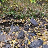 Листопад,на лесной речке... :: Георгиевич
