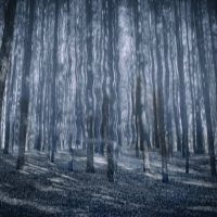 Призрачный лес :: Ирина АЛЕКСАндрович