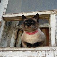 На прогулке у окна :: Yulia Raspopova
