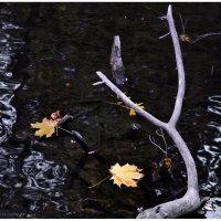 Вниз по течению :: Сергей Малашкин
