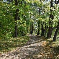 Прогулка в осень. :: tatiana