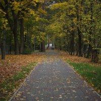 Осенняя аллея :: Дмитрий Аргунов