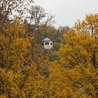 осень :: vladimir