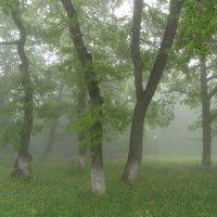 Таинственность леса :: Наталья (D.Nat@lia)