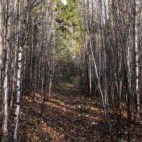 Прогулка в онежском лесу :: Марина Никулина