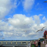 Люди,море,чайки... :: Сергей Карачин
