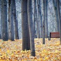 Поздняя осень :: Михаил Танин