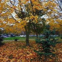 Зрелая осень в городе :: Андрей Лукьянов