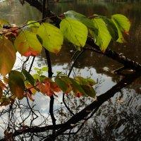 Последние теплые дни осени :: Letika Letyaga