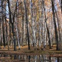 Осень :: Геннадий. Э.