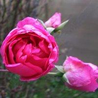 Ноябрьская красота :: sm-lydmila Смородинская