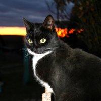 Чёрная кошка на закате :: Любовь Чащухина