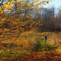 Осень. Красива русская природа// Всегда, в любое время года! :: Владимир Павлов