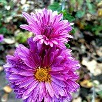 Осенний цветок... :: Aлександр **