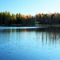 Ноябрьский день в Швеции :: Alm Lana