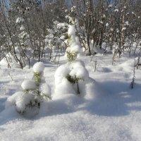 Зима пришла. :: Вера Литвинова
