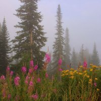 Утро на лесной опушке :: Сергей Чиняев