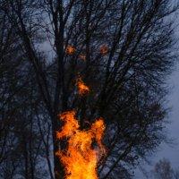 Магия огня :: Алексей
