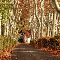 Осенняя аллея ..... :: Milan Bubeníček