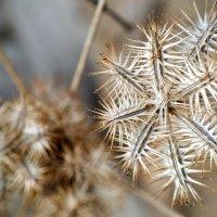 Колючий цветок :: Ефим Журбин