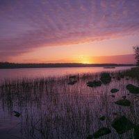 Ноябрьским утром :: liudmila drake