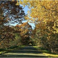Дороги осени. :: Валерия Комова