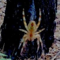 паук :: ольга хакимова