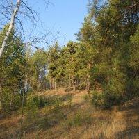 В лесу :: Anna Ivanova