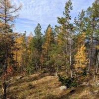 Осень на Урале :: Лариса Яворская