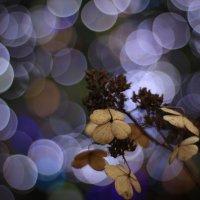 однажды этой странной бесснежной зимой.... :: Helga Sergeenko